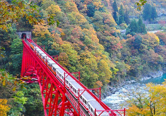 秋の黒部峡谷 トロッコ電車